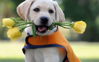 Самая ласковая порода собак