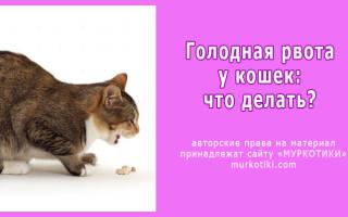 Кота рвет и не ест