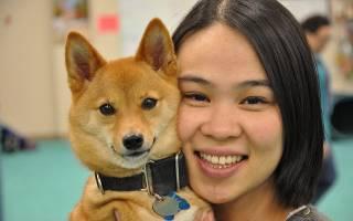Японская порода собак