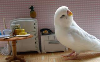 Игрушка попугай своими руками
