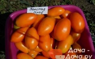 Золотая пуля томат