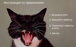 Как скормить таблетку кошке