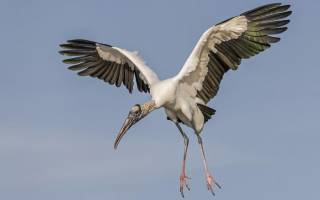 Кто воркует из птиц