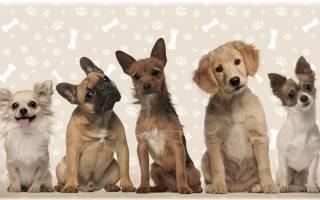 Породы собак декоративных