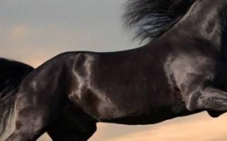Виды диких лошадей