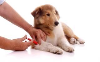 После прививки у собаки понос