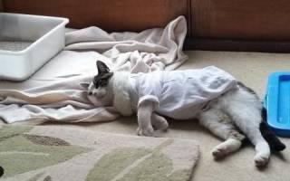 Понос у кошки после стерилизации