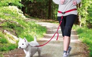 Какие бывают поводки для собак?