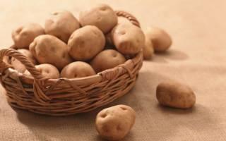 Голландская технология посадки картофеля