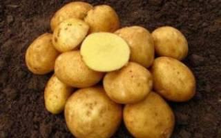 Винета сорт картофеля описание