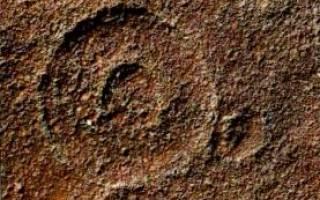 Первые животные на земле