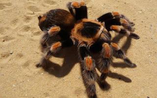 Какие виды пауков бывают