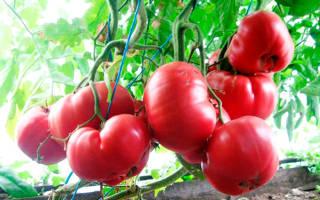 Самый сладкий сорт помидоров