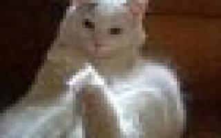 Что делать если у кошки застой молока