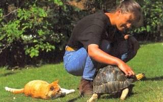 Как дрессировать черепаху красноухую