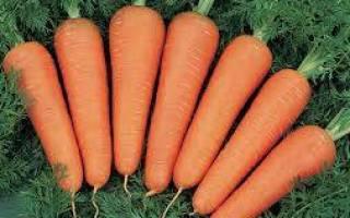 Морковь Канада отзывы