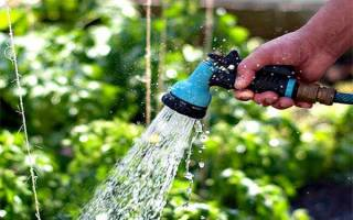 Когда поливать огурцы
