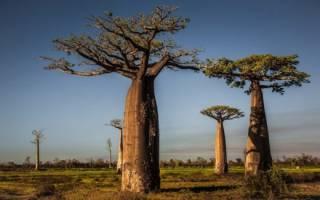 Растительность и животные саванны
