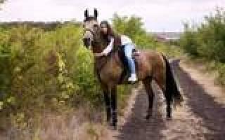 Продажа лошадей в Ростовской области