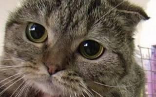 Почему дрожит кот