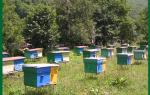 Выгодно ли пчеловодство