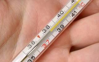 Температура у хорьков норма