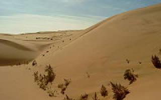 Приспособления животных в пустыне