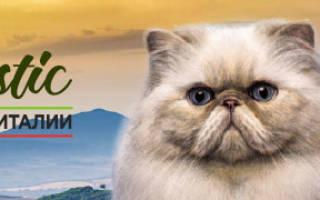 Как сцеживать молоко у кошки вручную, видео