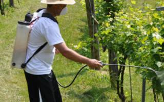 Виноград бордосская смесь