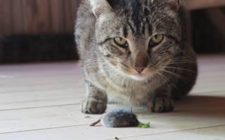 Таблетки от глистов коту названия