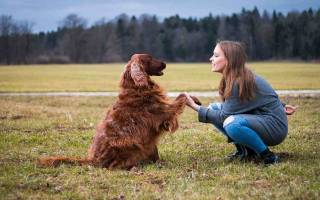 Как стать дрессировщиком собак