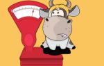 Средний вес быка