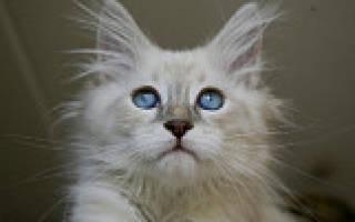 Кальций для котят
