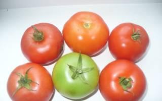 Увертюра томат отзывы