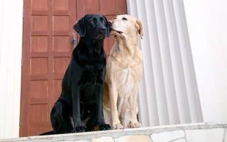 Кабель или кобель собака?