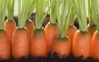 На каком расстоянии сажать морковь