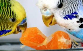 Можно попугаю хлеб