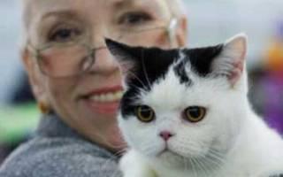 Хламидиоз от кошки