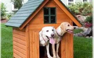 Порода сторожевых собак