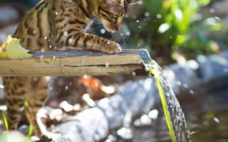 Почему котенок не пьет воду