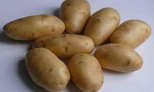 Картофель сорт аврора отзывы