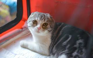 У кошки выделения из матки