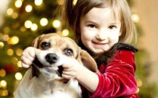 Собака кусает ребенка