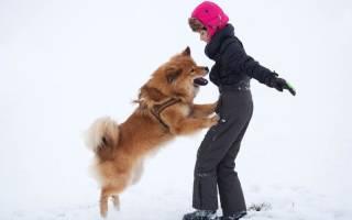 Как отучить щенка прыгать?