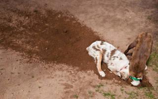 Собака роет ямы как отучить