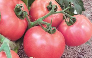 Сорта помидоров в Беларуси