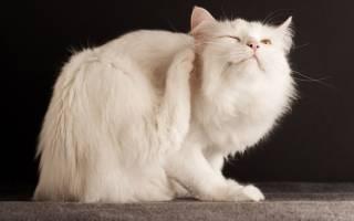 Власоед у кошек фото