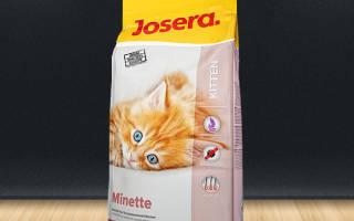 Самый лучший корм для котят